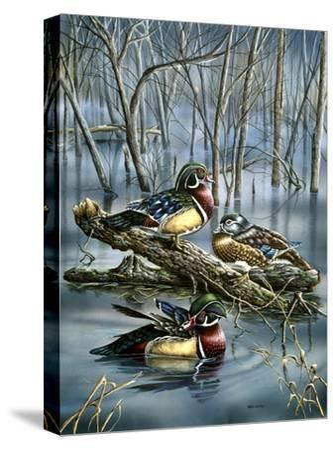 Misty Woodducks-Wanda Mumm-Stretched Canvas Print