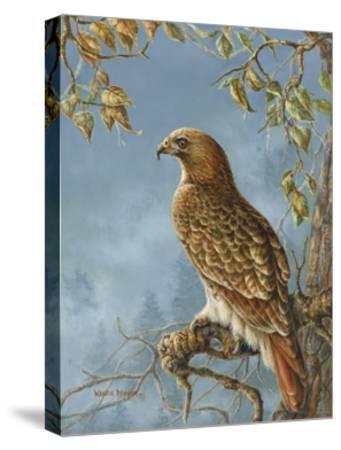 Retail Hawk-Wanda Mumm-Stretched Canvas Print