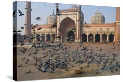 Pigeons in Mosque, Jama Masjid Mosque, Delhi, India-Peter Adams-Stretched Canvas Print