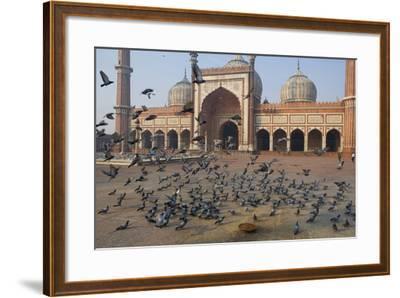 Pigeons in Mosque, Jama Masjid Mosque, Delhi, India-Peter Adams-Framed Photographic Print