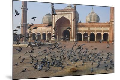 Pigeons in Mosque, Jama Masjid Mosque, Delhi, India-Peter Adams-Mounted Photographic Print