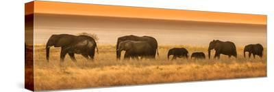 Etosha NP, Namibia, Africa. Elephants Walk in a Line at Sunset-Janet Muir-Stretched Canvas Print