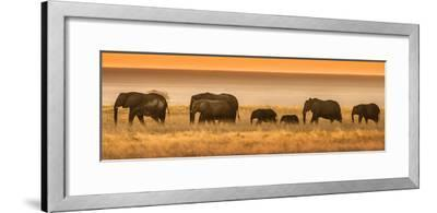 Etosha NP, Namibia, Africa. Elephants Walk in a Line at Sunset-Janet Muir-Framed Photographic Print