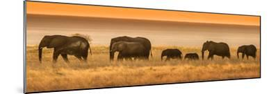 Etosha NP, Namibia, Africa. Elephants Walk in a Line at Sunset-Janet Muir-Mounted Photographic Print