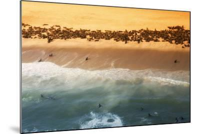 Skeleton Coast, Namibia. Abstract View of a Colony of Cape Fur Seals-Janet Muir-Mounted Photographic Print
