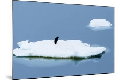 Lemaire Channel, Antarctica. Adelie Penguin Rests on Sea Ice-Janet Muir-Mounted Photographic Print