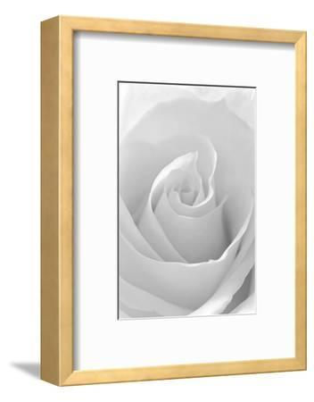 Black and White Rose Abstract-Anna Miller-Framed Photographic Print