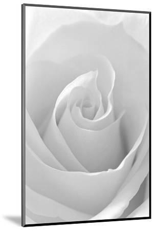 Black and White Rose Abstract-Anna Miller-Mounted Photographic Print