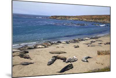 Elephant Seals, Piedras Blancas, San Simeon, California-Peter Bennett-Mounted Photographic Print