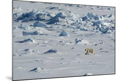Norway. Svalbard. Hinlopen Strait. Polar Bear Walking on the Drift Ice-Inger Hogstrom-Mounted Photographic Print