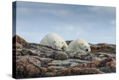 Canada, Nunavut, Repulse Bay, Two Polar Bears Resting Along a Ridge-Paul Souders-Stretched Canvas Print