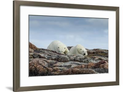 Canada, Nunavut, Repulse Bay, Two Polar Bears Resting Along a Ridge-Paul Souders-Framed Photographic Print