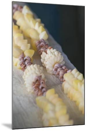 French Polynesia, Island of Mangareva, Rikitea. Mixed Seashell Lei-Cindy Miller Hopkins-Mounted Photographic Print