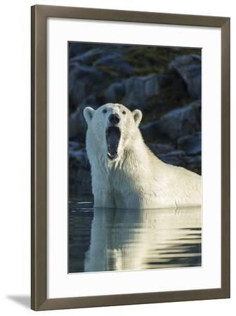 Canada, Nunavut, Repulse Bay, Polar Bears Yawning in Water-Paul Souders-Framed Photographic Print