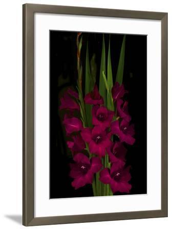 Red Gladiola-Anna Miller-Framed Photographic Print