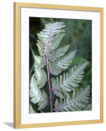 Fern Frond-Anna Miller-Framed Photographic Print