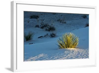 Sand Patterns, Yucca, White Sands Nm, Alamogordo, New Mexico-Michel Hersen-Framed Photographic Print