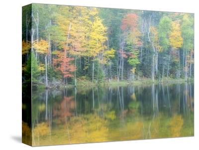 Michigan, Upper Peninsula. Fall Colors on Thornton Lake, Alger Co-Julie Eggers-Stretched Canvas Print