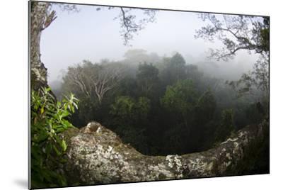 Rainforest Canopy. Yasuni NP, Amazon Rainforest, Ecuador-Pete Oxford-Mounted Photographic Print