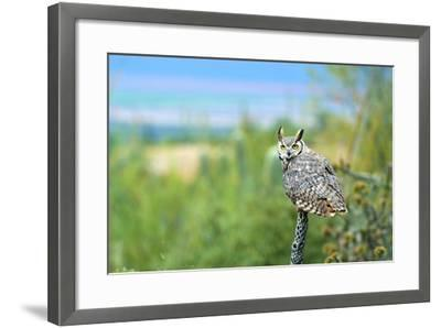 Great Horned Owl, also known as the Tiger Owl-Richard Wright-Framed Photographic Print