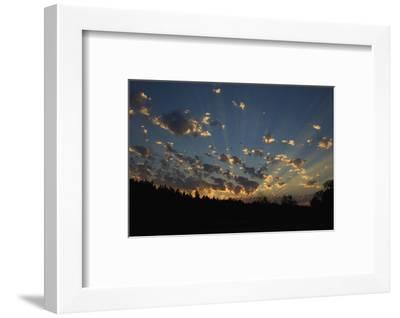 Red-Tail Hawk Sunset-Ken Archer-Framed Photographic Print