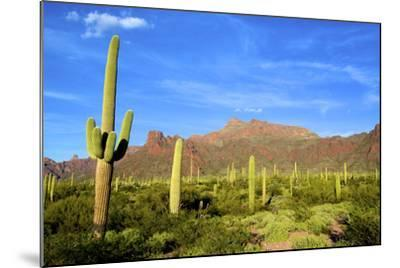 Organ Pipe Cactus National Monument, Ajo Mountain Drive in the Desert-Richard Wright-Mounted Photographic Print