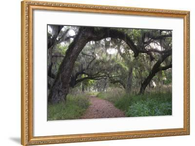 Morning Light Illuminating the Moss Covered Oak Trees in Florida-Sheila Haddad-Framed Photographic Print