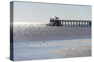 Mississippi, Bay St Louis. Shorebirds and Pier Seen from Marina-Trish Drury-Stretched Canvas Print