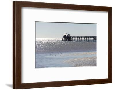 Mississippi, Bay St Louis. Shorebirds and Pier Seen from Marina-Trish Drury-Framed Photographic Print
