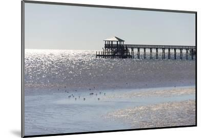 Mississippi, Bay St Louis. Shorebirds and Pier Seen from Marina-Trish Drury-Mounted Photographic Print