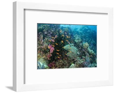 Coral Reef Diversity, Fiji-Pete Oxford-Framed Premium Photographic Print
