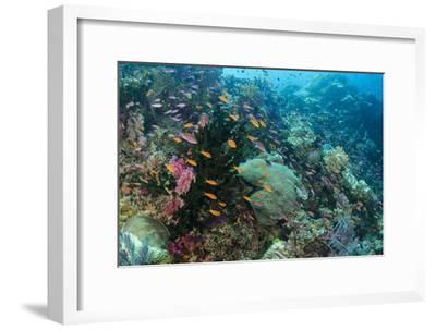 Coral Reef Diversity, Fiji-Pete Oxford-Framed Photographic Print