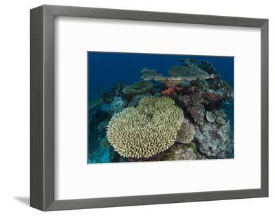Coral Reef Diversity, Rainbow Reef, Fiji-Pete Oxford-Framed Photographic Print