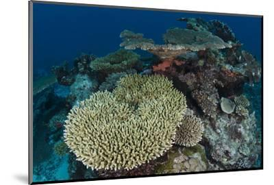 Coral Reef Diversity, Rainbow Reef, Fiji-Pete Oxford-Mounted Photographic Print