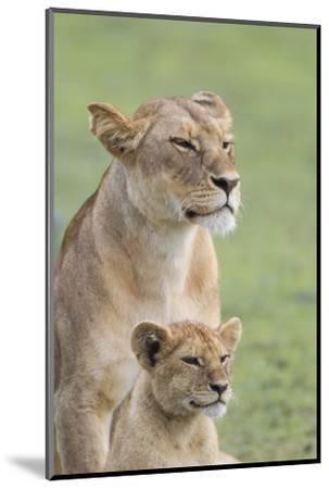 Lioness with its Female Cub, Standing Together, Side by Side-James Heupel-Mounted Photographic Print