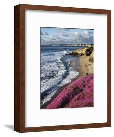 USA, California, La Jolla, Flowers Along the Pacific Coast-Christopher Talbot Frank-Framed Photographic Print