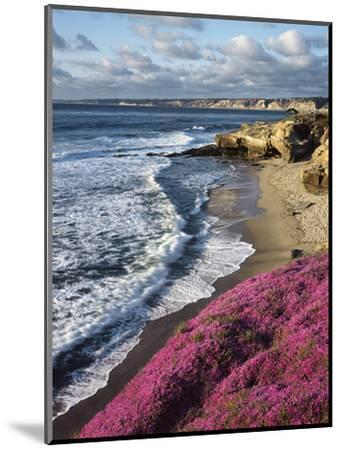 USA, California, La Jolla, Flowers Along the Pacific Coast-Christopher Talbot Frank-Mounted Photographic Print
