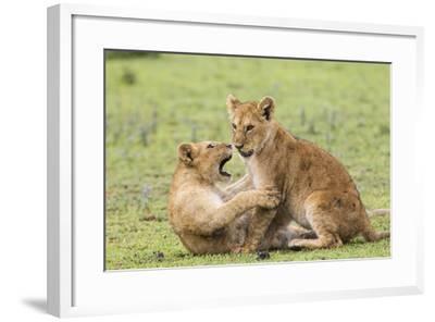 Two Lion Cubs Play, Ngorongoro, Tanzania-James Heupel-Framed Photographic Print