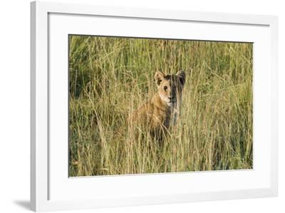Kenya, Maasai Mara, Mara Triangle, Mara River Basin, Lion Cubs-Alison Jones-Framed Photographic Print