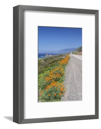 USA, California, Near Big Sur, California Poppies, Along Highway 1-Rob Tilley-Framed Photographic Print