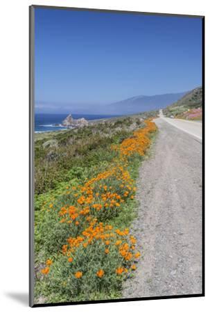 USA, California, Near Big Sur, California Poppies, Along Highway 1-Rob Tilley-Mounted Photographic Print