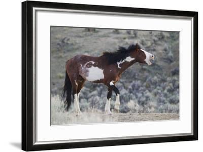Wild Horses. Steens Mountains, Oregon-Ken Archer-Framed Photographic Print