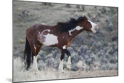 Wild Horses. Steens Mountains, Oregon-Ken Archer-Mounted Photographic Print