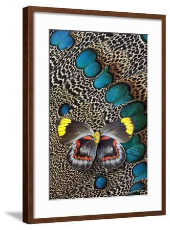 Single Delias Butterfly Underside on Malayan Peacock-Pheasant Feathers-Darrell Gulin-Framed Photographic Print