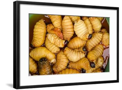 Palm Weevil Grubs. Pompeya Market. Amazon Rainforest, Ecuador-Pete Oxford-Framed Photographic Print
