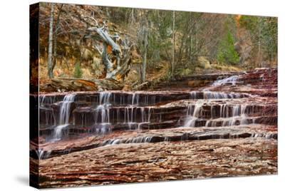Left Fork Virgin River Zion National Park, Utah, USA-John Ford-Stretched Canvas Print