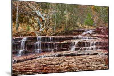 Left Fork Virgin River Zion National Park, Utah, USA-John Ford-Mounted Photographic Print