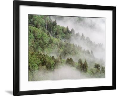 USA, Tennessee, North Carolina, Great Smoky Mountains National Park-Zandria Muench Beraldo-Framed Photographic Print