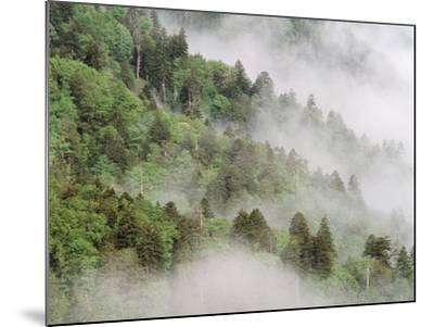 USA, Tennessee, North Carolina, Great Smoky Mountains National Park-Zandria Muench Beraldo-Mounted Photographic Print