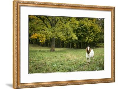 Pittsburg, PA. USA. Fall on the Farm-Julien McRoberts-Framed Photographic Print